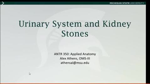 Thumbnail for entry Applied Anatomy Video 14: Urinary System and Kidney Stones