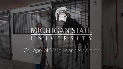 Thumbnail for entry VM 515-Horse Physical Exam