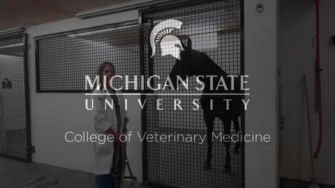 Thumbnail for entry VM 515-Horse Physical Exam