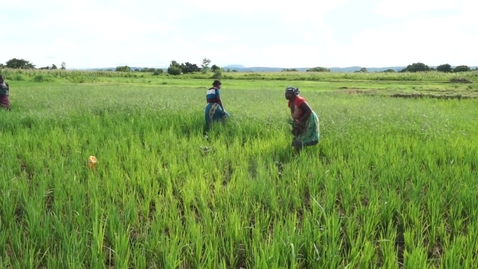 Thumbnail for entry FERTILIZER POLICY VALIDATION
