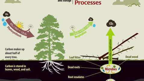 Thumbnail for entry Carbon Processes: Sources and Storage