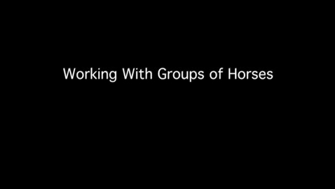 Thumbnail for entry VM 515-Working with Groups of Horses