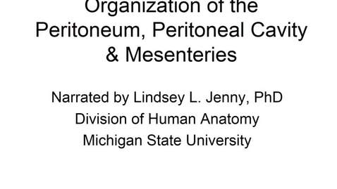 Thumbnail for entry Organization of the Peritoneum, Peritoneal Cavity, & Mesenteries