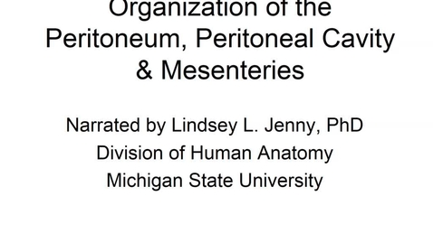 Thumbnail for entry ANTR510 (015) Organization of the Peritoneum, Peritoneal Cavity, & Mesenteries