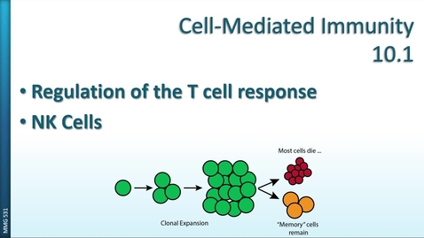 Thumbnail for entry MMG531 (10.1) - Cell-Mediated Immunity - Regulation and NK Cells