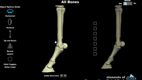 Thumbnail for entry VM 516-Intro to bones of distal equine limb