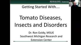 Thumbnail for entry Tomato diseases, insects and disorders