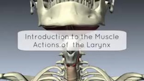 Thumbnail for entry Introduction to Muscles and Actions of the Layrnx