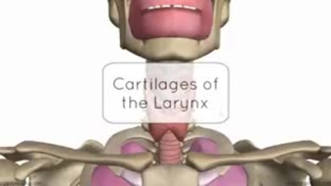 Thumbnail for entry 3D Layrngeal Cartilages