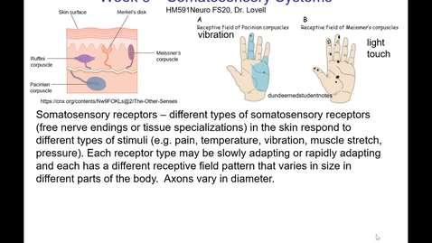 Thumbnail for entry Lovell HM591FS20 Week06 Somatosensory