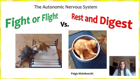 Thumbnail for entry The Autonomic Nervous System - Rest and Digest vs. Fight or Flight