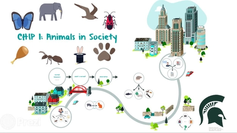 Thumbnail for entry CHIP 1 Animals in Society Intro by Dr. Laura Nelson