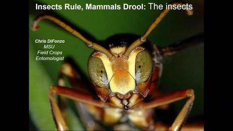Thumbnail for entry Insect morphology