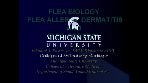 Thumbnail for entry VM 534-Flea Allergy Dermatitis