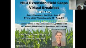Thumbnail for entry Virtual Breakfast 5/24/18: Chris DiFonzo, Insect Management