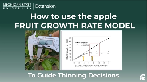 Thumbnail for entry How to Use the Fruit Growth Model to Guide Apple Thinning Decisions