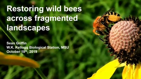 Thumbnail for entry Restoring wild bees across fragmented landscapes