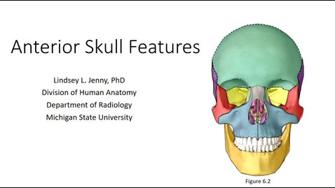 Thumbnail for entry Anterior Skull Bones & Features