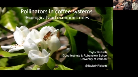 Thumbnail for entry Pollinators in coffee systems Ecological and economic roles