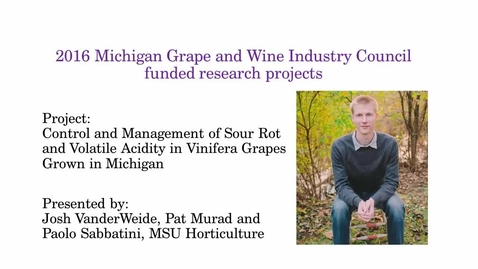Thumbnail for entry Control and Management of Sour Rot and Volatile Acidity in Vinifera Grapes Grown in Michigan