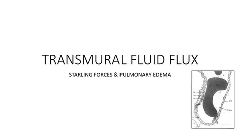Thumbnail for entry VM 520-Transmural fluid flux (2021)