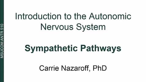 Thumbnail for entry ANTR510 Introduction to the Autonomic Nervous System - Sympathetic Pathways