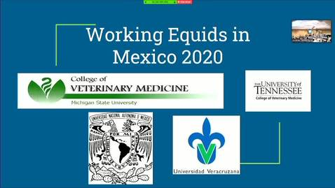 Thumbnail for entry Working Equids in Mexico -2020