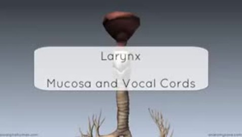 Thumbnail for entry Layrngeal Mucosa and the Vocal Folds