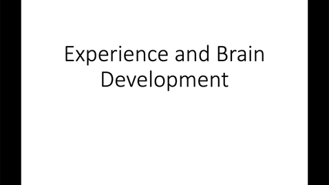 Thumbnail for entry Experience and Brain Development