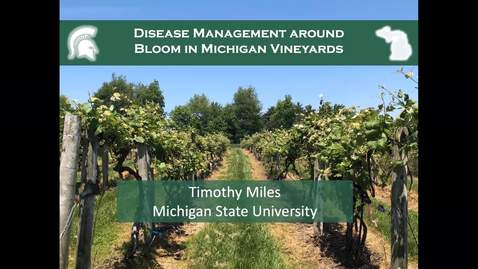 Thumbnail for entry Disease management around bloom in Michigan vineyards