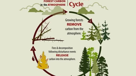 Thumbnail for entry Carbon Cycle: The Closed Loop of Forest Carbon in the Atmosphere