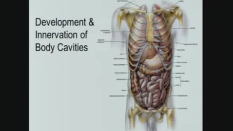 Thumbnail for entry Development and Innervation of Body Cavities