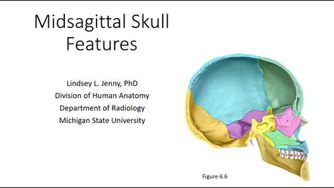 Thumbnail for entry Midsagittal Skull Bones & Features
