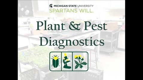 Thumbnail for entry MSU Plant & Pest Diagnostics Introduction & Sample Submission