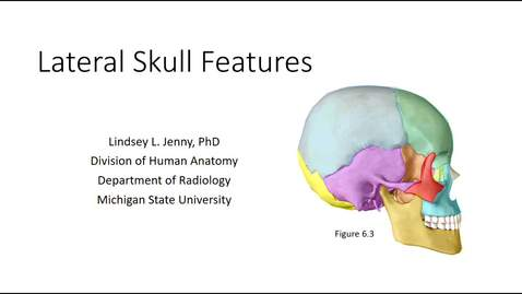 Thumbnail for entry Lateral Skull Bones & Features