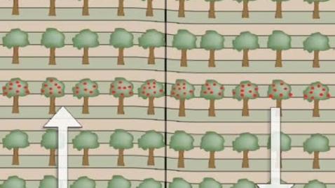 Thumbnail for entry Strike-SlipTrees.mov